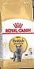 Royal Canin British Shorthair Adult сухой корм для британских кошек 10кг - Фото