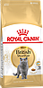 Royal Canin British Shorthair Adult сухой корм для британских кошек старше 12 месяцев 4КГ - Фото