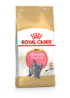 Royal Canin Kitten British Shorthair сухой корм для котят британской кошки до 12 месяцев 10КГ