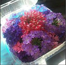 Пищевые цветы, фото 3