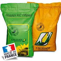 Нодарі КС гібрид CAUSSADE (Нодари, Франция) озимий ріпак