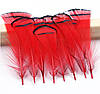 Перья фазана, индюка Декоративные (Перо) Красные  5-8 см 10 шт/уп
