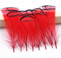 Перья фазана, индюка Декоративные (Перо) Красные  5-8 см 10 шт/уп, фото 1