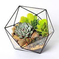Флорариум Half (икосаэдр)