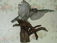 Чучело сокола, фото 1