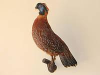 Чучело фазана на ветке, фото 1
