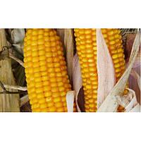Амарок F1 - кукуруза кормовая, 30 000 семян, Мнагор, Украина