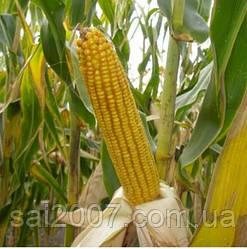 Семена кукурузы НС 2662