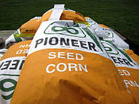 Семена подсолнечника Пионер (Pioneer) раннеспелый П64ЛE11