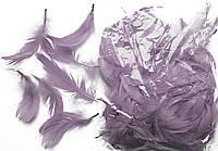 Перья серые