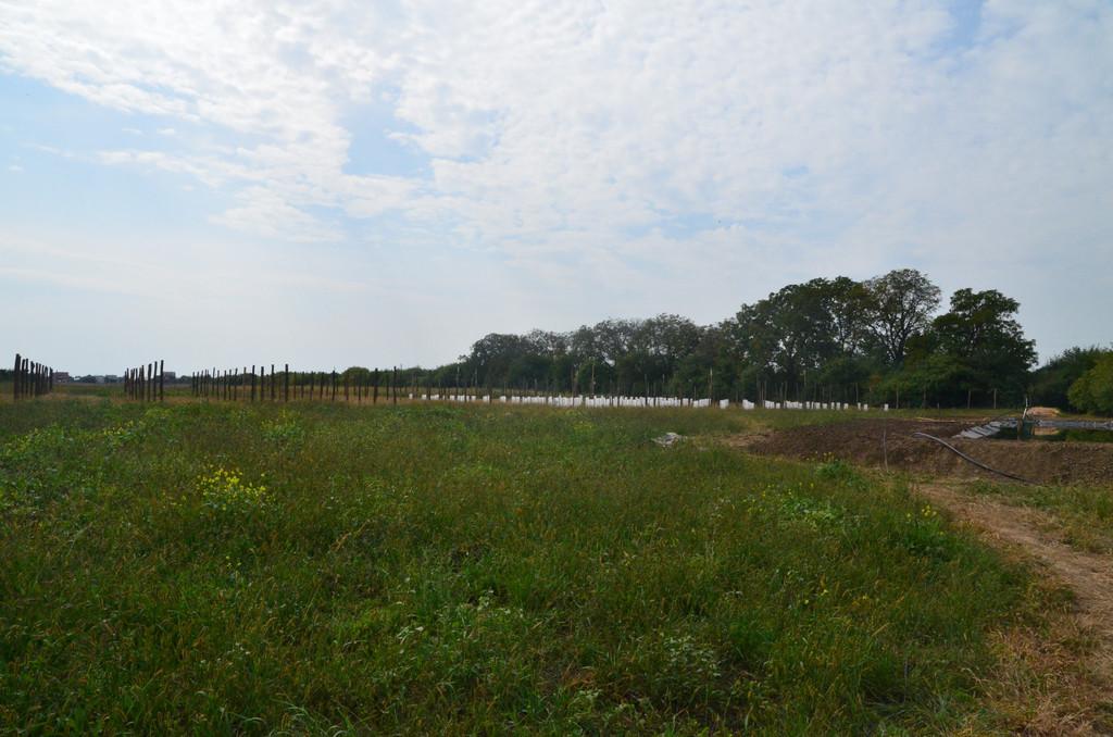 """Создание плантация Киви """"Карпат Стратона  Валентайн"""" ( открытие , сентябрь 2014 г. )"""