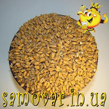 Солод Пшеничный (Украина)