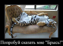 """Акция   на комплект """"ФЕОДАЛ"""""""