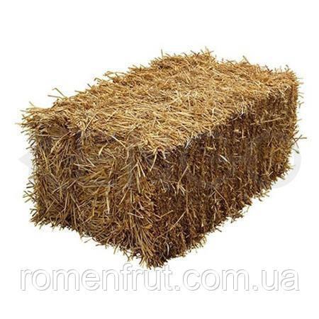 Солома пшеничная  тюкованная