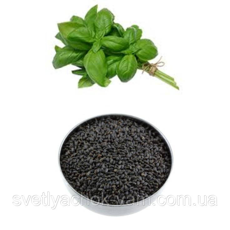 Базилик зеленый Чудесная Зелень ароматный с приятным запахом лекарственное растение, упаковка от 0,5 кг