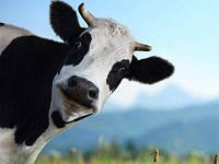 Премикс «ШенМикс Калф» 4% (телята 0-2 мес.)