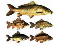 Комбикорм для промысловой рыбы 25 кг