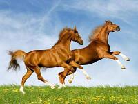 """Премикс """"ШенМикс Уни Хорс"""" лошади"""