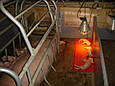 Инфракрасная лампа 230V, 175W E27/5000h, HELIOS (Польша), фото 3