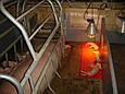 Інфрачервона лампа PAR38 230V, 175W E27/5000h, HELIOS (Польща), фото 4