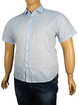 Чоловіча сорочка Negredo 0295 великих розмірів