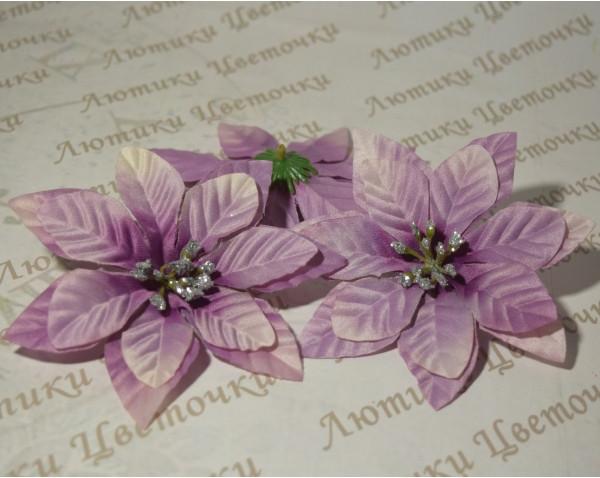 Пуансеттія фіолетова