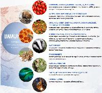 IMMUNITY - Природный иммуномодулирующий комплекс - капли для иммунитета (Иммунити), фото 2