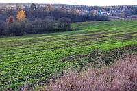 Гербіциди для озимих зернових культур (пшениця і ячмінь)