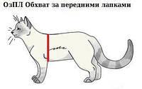 Як визначити розмір одягу для кішок