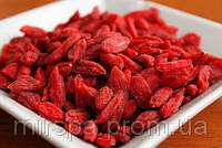 Ягоды годжи: чудо ягоды из Гималаев