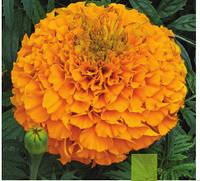 Perfection Orange