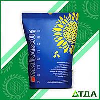 Семена подсолнечника Mas 82.A/ Мас 82.А