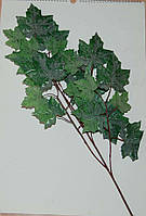 Ветка  клена зеленного  65 см