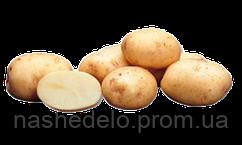 Семенной картофель Ривьера 3 кг.1 репродукция