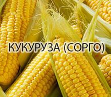 Кукуруза (сорго)