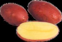 Семенной картофель Ароза 3 кг.1 репродукция