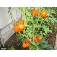 """Семена Семена томата """"Апельсин"""" - 0,1 г  ТМ Весна"""