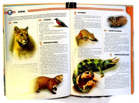 Атлас животных., фото 2