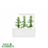 Click&Grow Сменный картридж Click & Grow Елка 7564