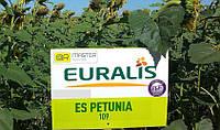 Петуния Евралис семена подсолнечника проверенный высокоурожайный гибрид устойчив к заразихе и засухе