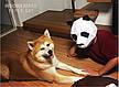 Маска панды из картона, ручная сборка. Голова панды бумажная для взрослых, фото 2