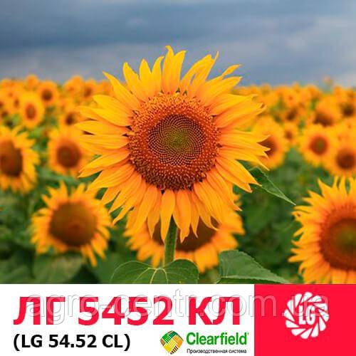 Насіння соняшнику ЛГ5452 ХО КЛ