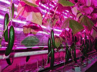 Светодиодное фитоосвещение для растений, экономное продление светового дня для растения.