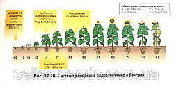Технологическая схема выращивания подсолнечника