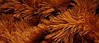Большй  медведь  Бублик 200 см коричневый, фото 4