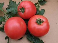 ВП-1 F1 (VP-1 F1) семена томата индет. Vilmorin 1 000 семян