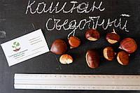 Семена каштан съедобный(3-8 грамм) 10 штук Castánea satíva посевной, орехи для саженцев(насіння для саджанців), фото 1