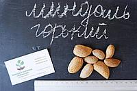 Горький миндаль семена (10 штук), косточка для выращивания саженцев, насіння гіркого мигдаля для саджанців