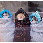 Зима скоро !