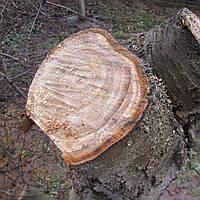 Спилить аварийное дерево Харьков